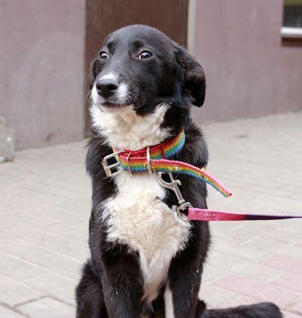 Холли - маленькая красивая и добрая собака ищет дом!