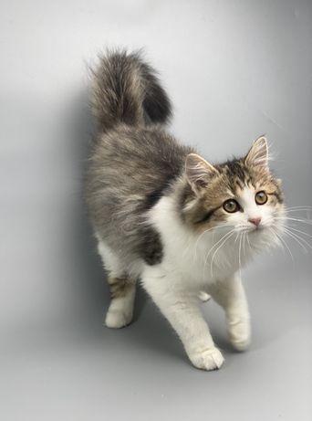 Ласковый котенок в хорошие руки