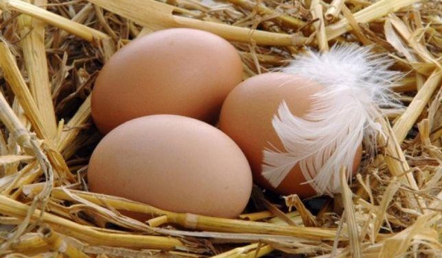 Курячі яйця свіжі