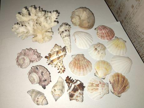 Ракушки, коралл для аквариума или декора