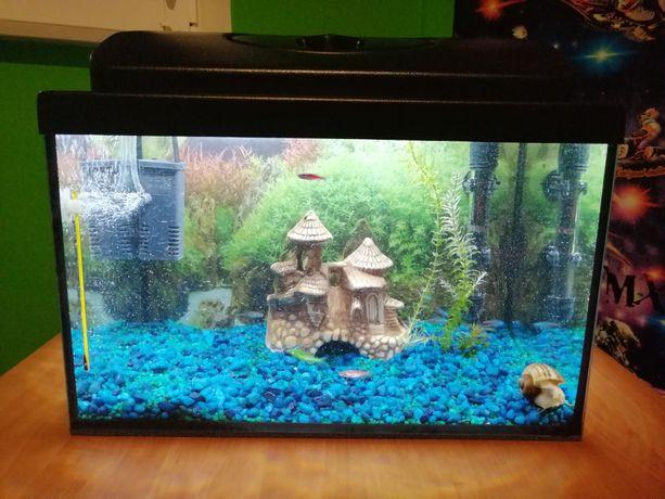 Akwarium 25l z rybkami