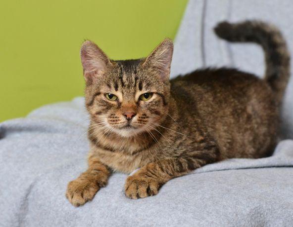Я кошка Шалфея, ищу любящую семью! Мне 1,5 года