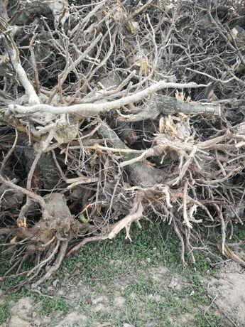 drewno opałowe karpy