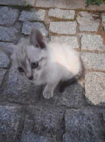gatinhas adoção super responsavel