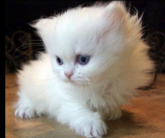 Продам котят