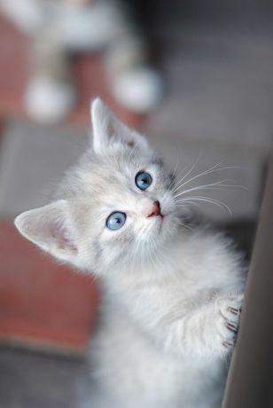 Милые кошечки   ищут любящую семью!