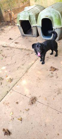 Cão porte pequeno 2 anos muito meigo