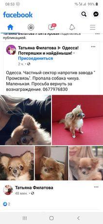 SOS!!! СРОСЧНО!!! Пропала собака!!!