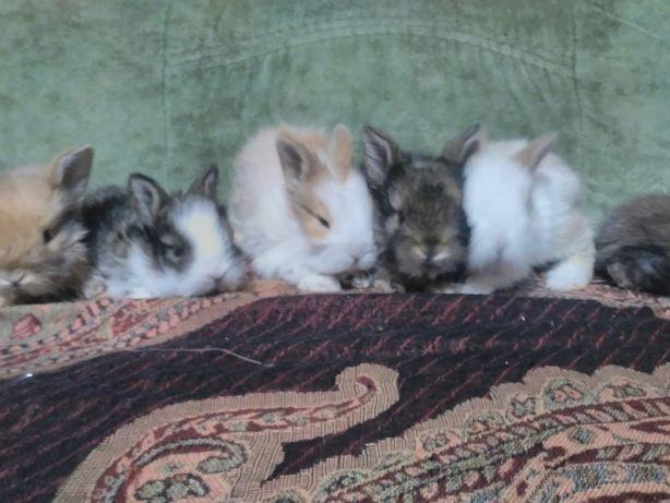 Новогодние крольчата