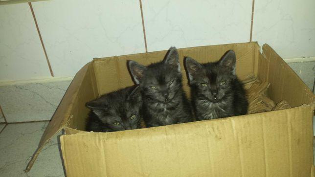 Piękne wesołe i towarzyskie kociaki