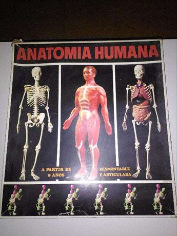 Anatomia humana em peças para montar (para coleccionadores)