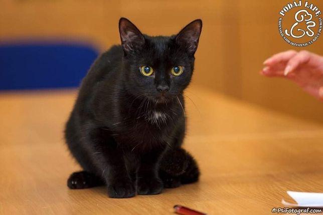 Kociak Orion szuka domu