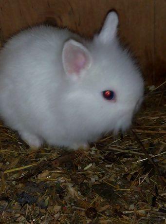 декоративные миники кролики