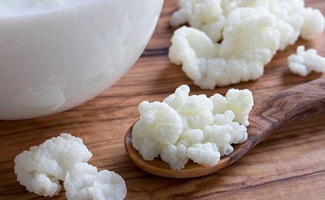 KEFIR - grãos que fermentam