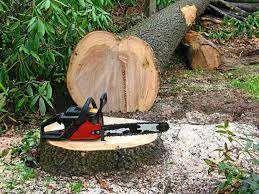 Wycinka drzew - Tanio, szybko i profesjonalnie. Odkleszczanie