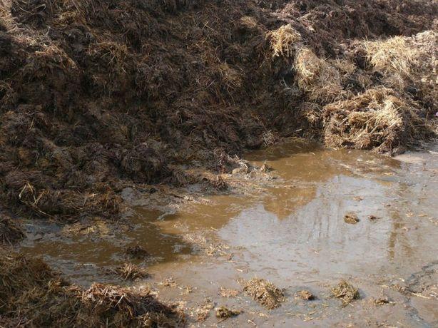 Obornik bydlęcy 3-letni przepalony kompost, nawóz naturalny