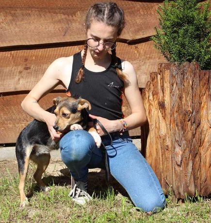 Karmen- 2-3 letnia sunia szuka domu- pies- oddam psa w dobre rece