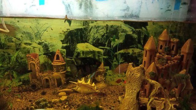 Продам аквариум с рыбками на 290литров