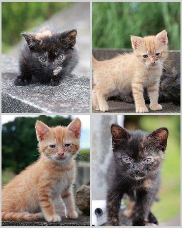 Quatro gatinhos para adoção