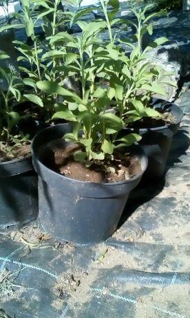 Plantas Tropicais a 3,5€