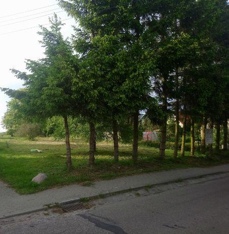 Działka w centrum wsi Wiśniewa k/Sępólna Krajeńskiego