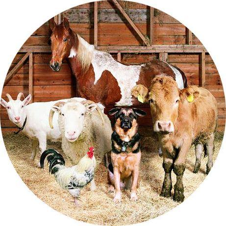 Премиксы 1% для животных (для свиней, бройлеров, перепелов,кроликов,