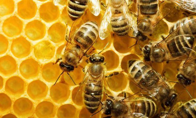 Продам Пакети бджіл. Херсон. Довідки за телефоном +380994637298