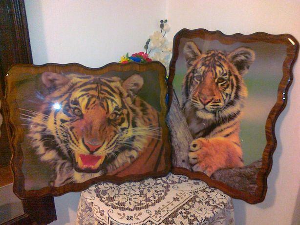 Ciekawe zdjęcia obraz Tygrys