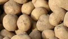 ziemniaki sprzedam transport gratis