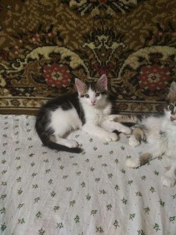 Отдам бесплатно.котята 3 месяца,черненькая кошка,4 мальчика.