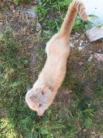 Коты опт и розница) бесплатно