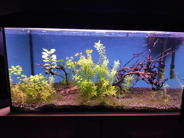 Akwarium z rybkami i ślimakami