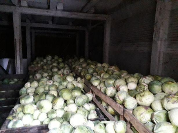Продаю капусту 1 грн