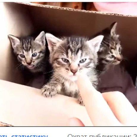 рыжий котенок  бесплатно Одесса