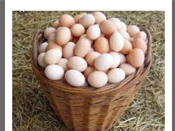 Jajka wiejskie eko