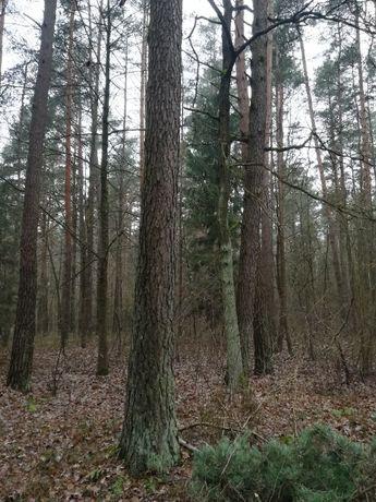 Drewno tartaczne, konstrukcyjne, sosna, dłużyca
