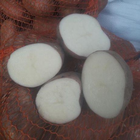 Ziemniaki Irga Amerykany
