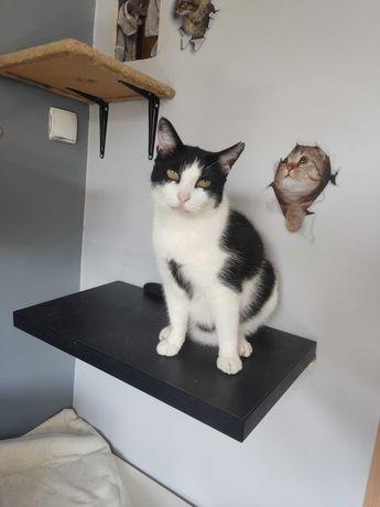 Prince kochający, uwielbiający towarzystwo kot do adopcji!