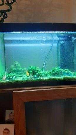 Aquario de peixes de agua fria de 50 litros