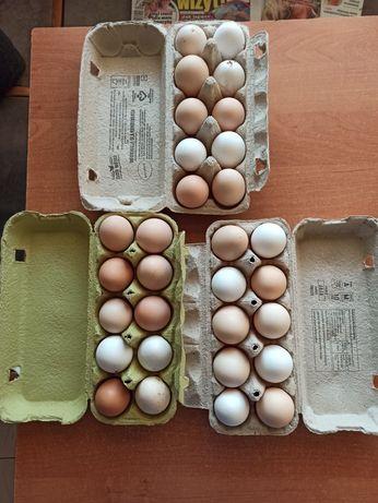 Świeże jaja wiejskie od kur w wolnego wybiegu! BEZ żadnych wspomagaczy