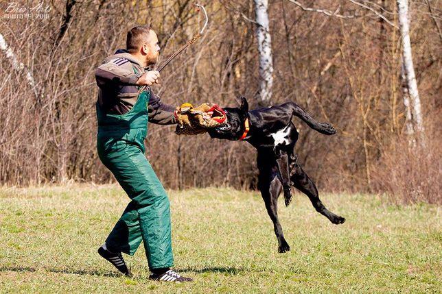 дрессировка собак (послушание , защитная служба)