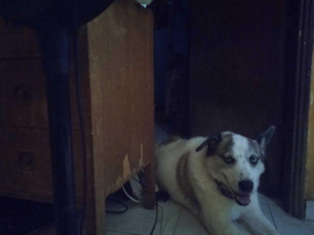 Urgente! Dou cão muito calmo e docil