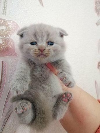 Котёнок пушистик
