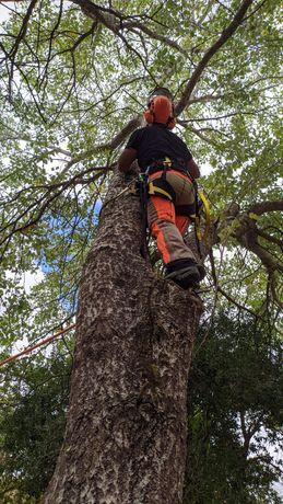 Arborista - Corte de Árvores (Poda ou Abate)