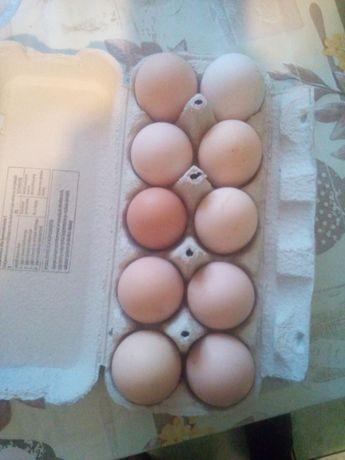 Jaja wiejskie !!