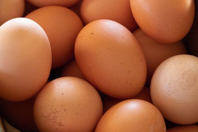 Продам домашнии яйца