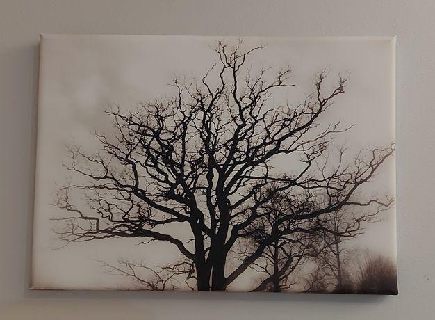"""Obraz na płótnie """"Drzewo"""""""