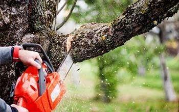 Спил деревьев большой опыт