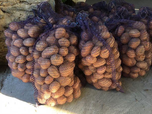 Ziemniaki belarosa