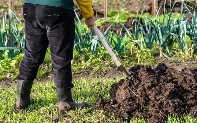 Naturalny nawóz pod trawę dla roślin,warzyw i drzew owocowych,obornik
